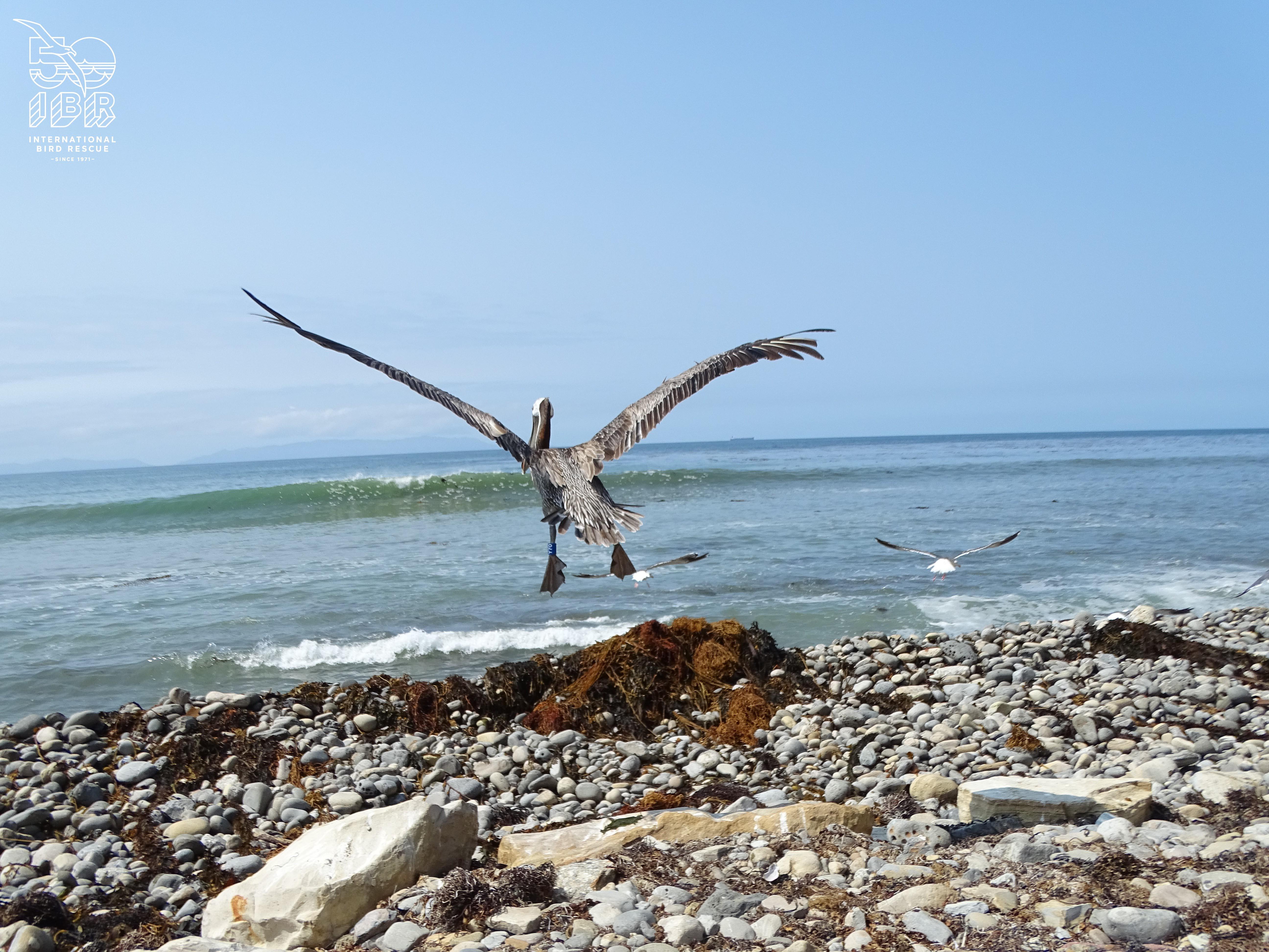 pelican ibr partnership sustainability