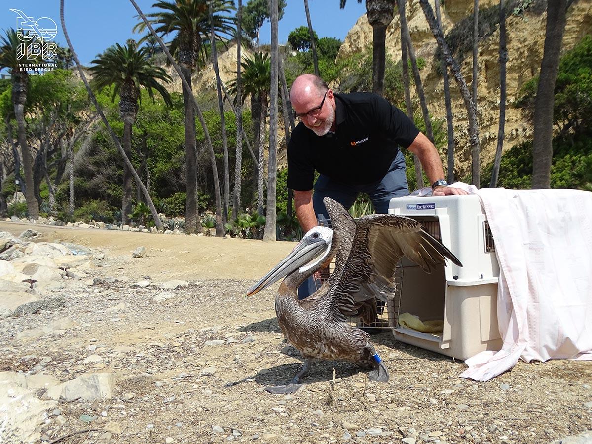 pelican international bird rescue partnership
