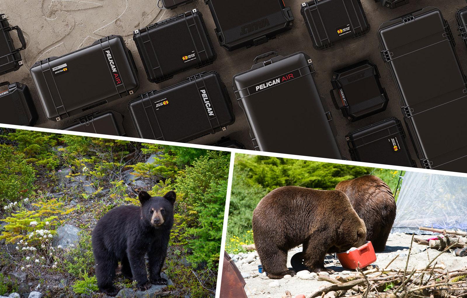 hard cases brown black bears