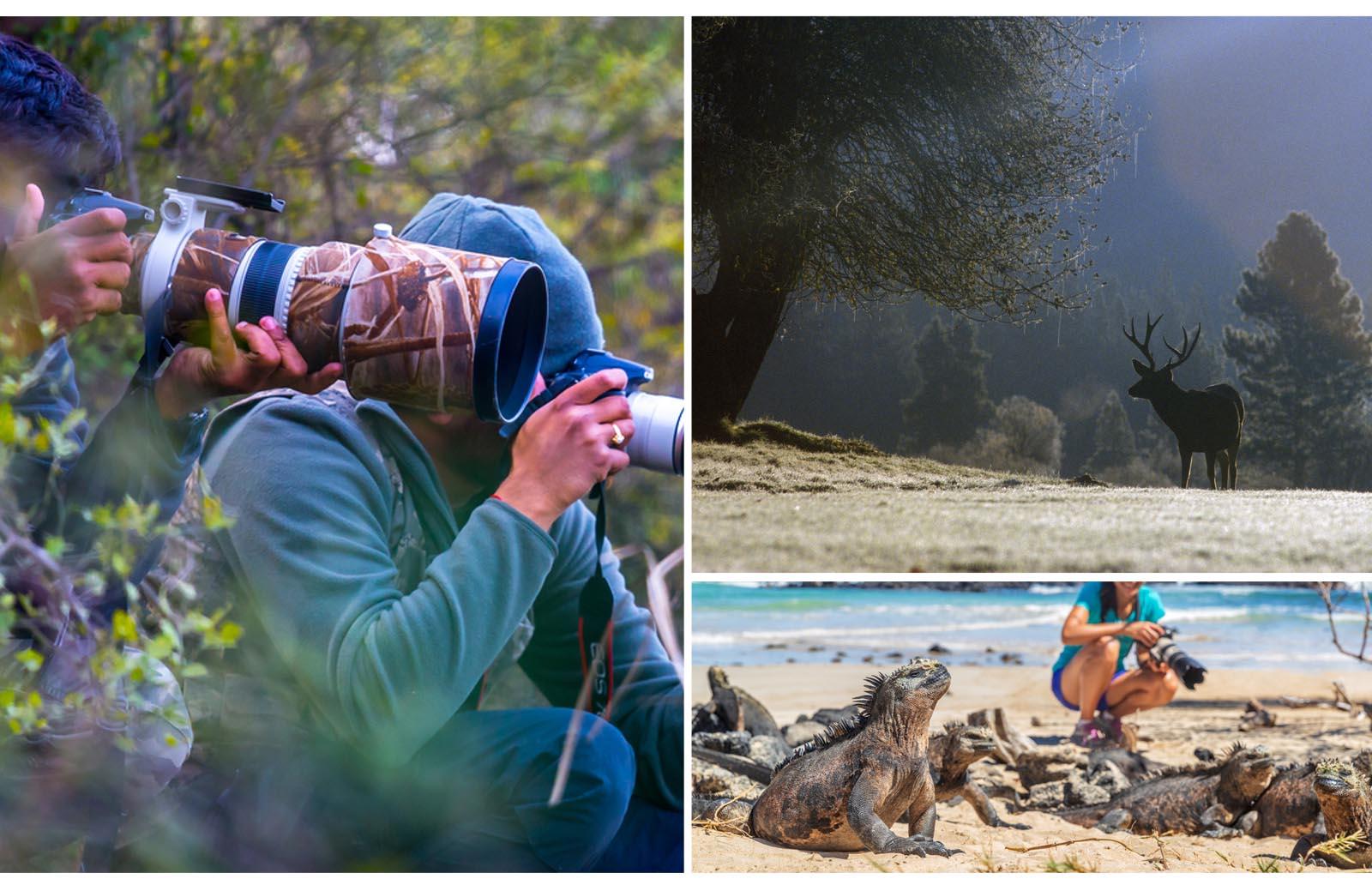 wildlife photography practices