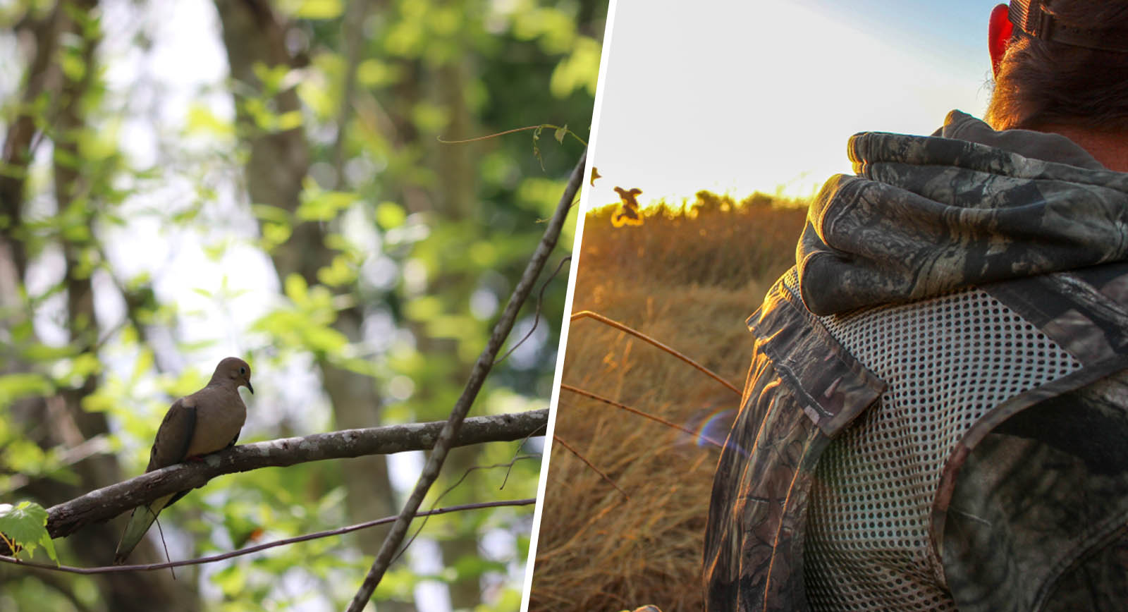 get started with dove hunting