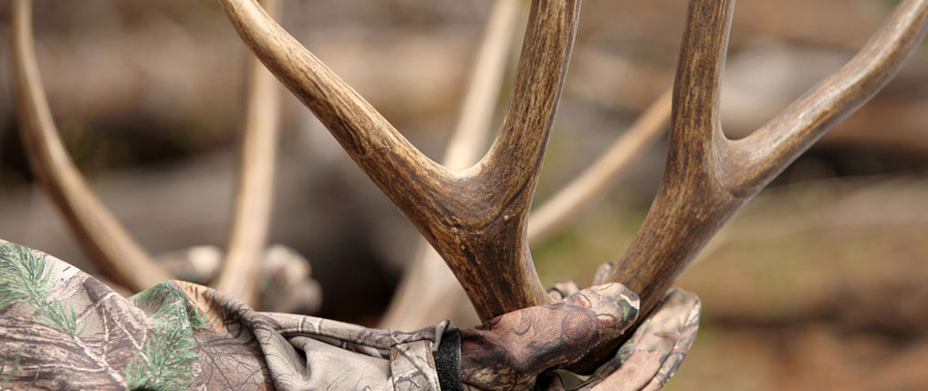 shed hunting 101