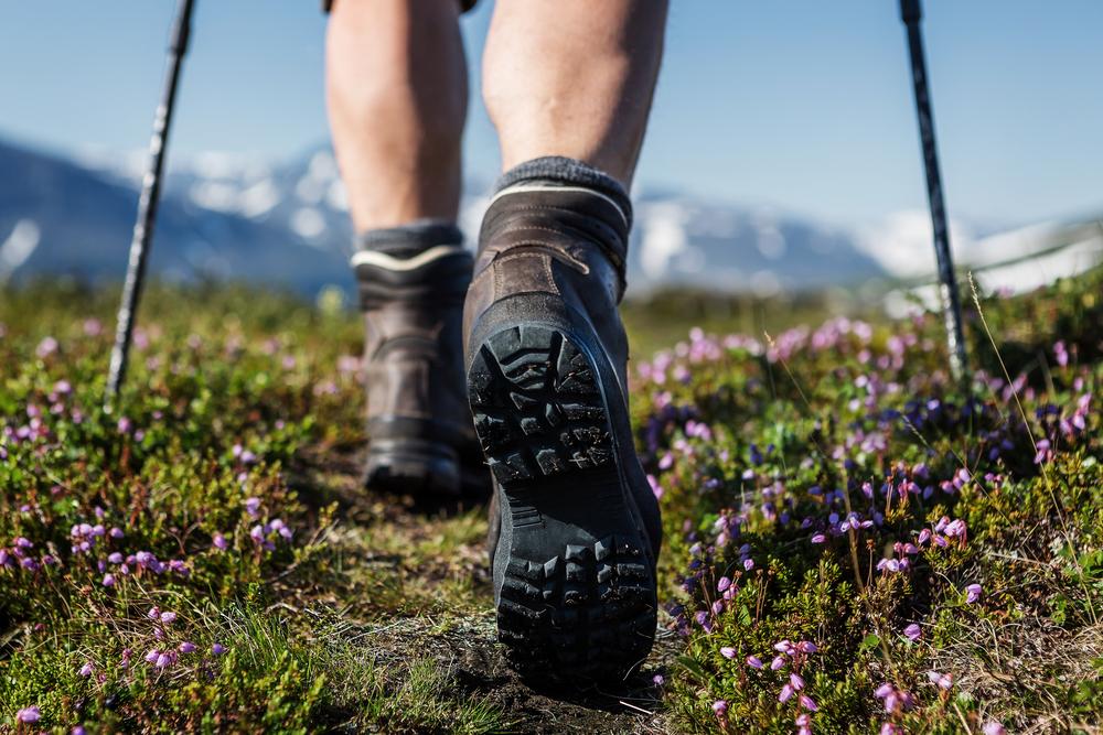 hiking trail flowers
