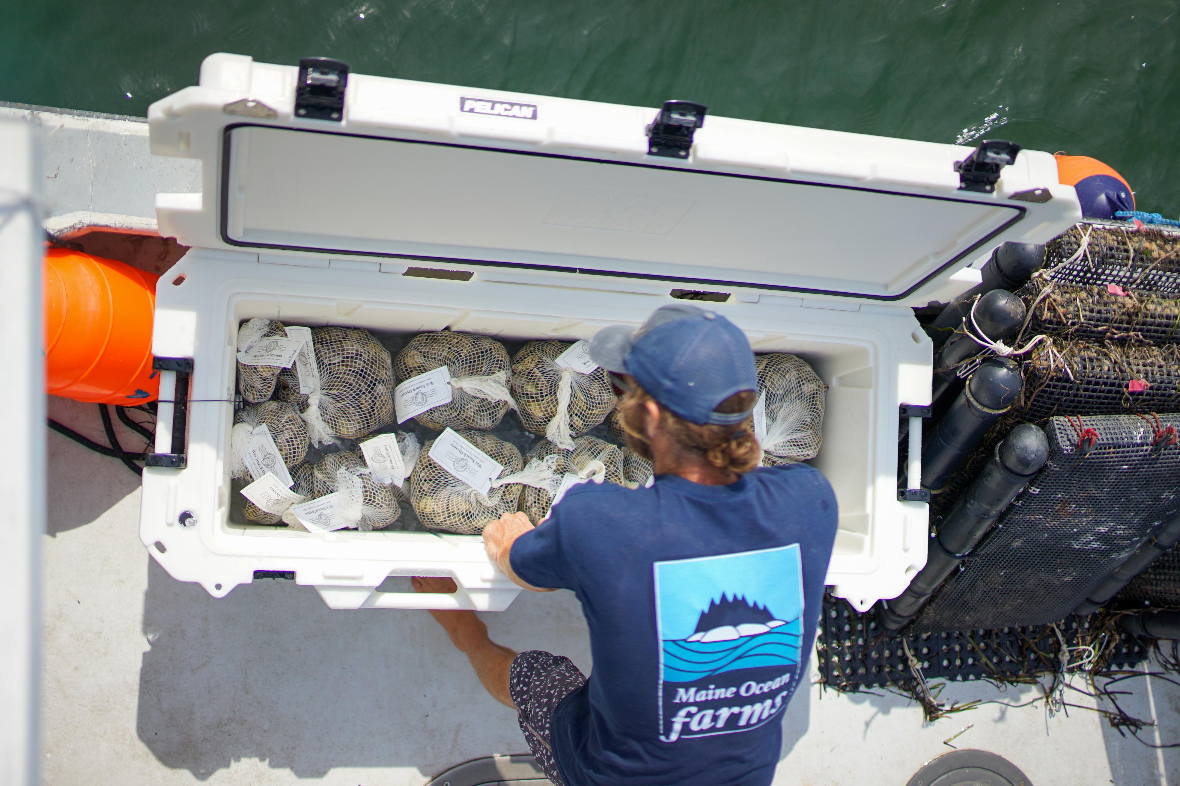 250qt maine ocean cooler