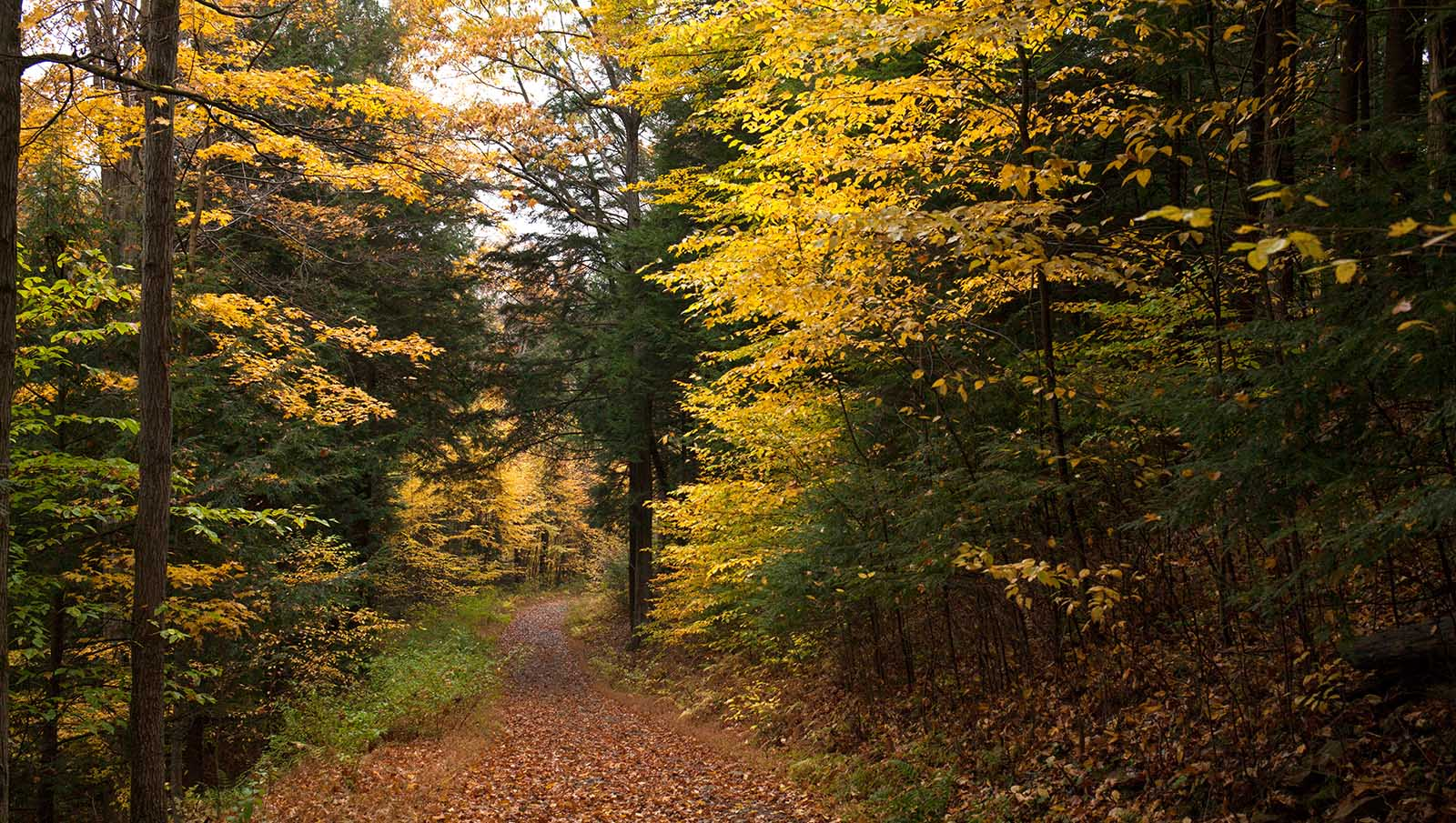 path in forest autumn