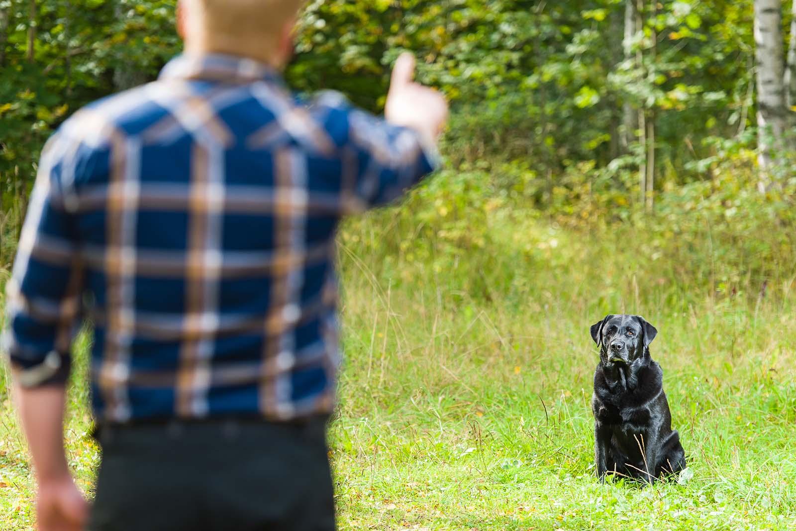 owner training labrador
