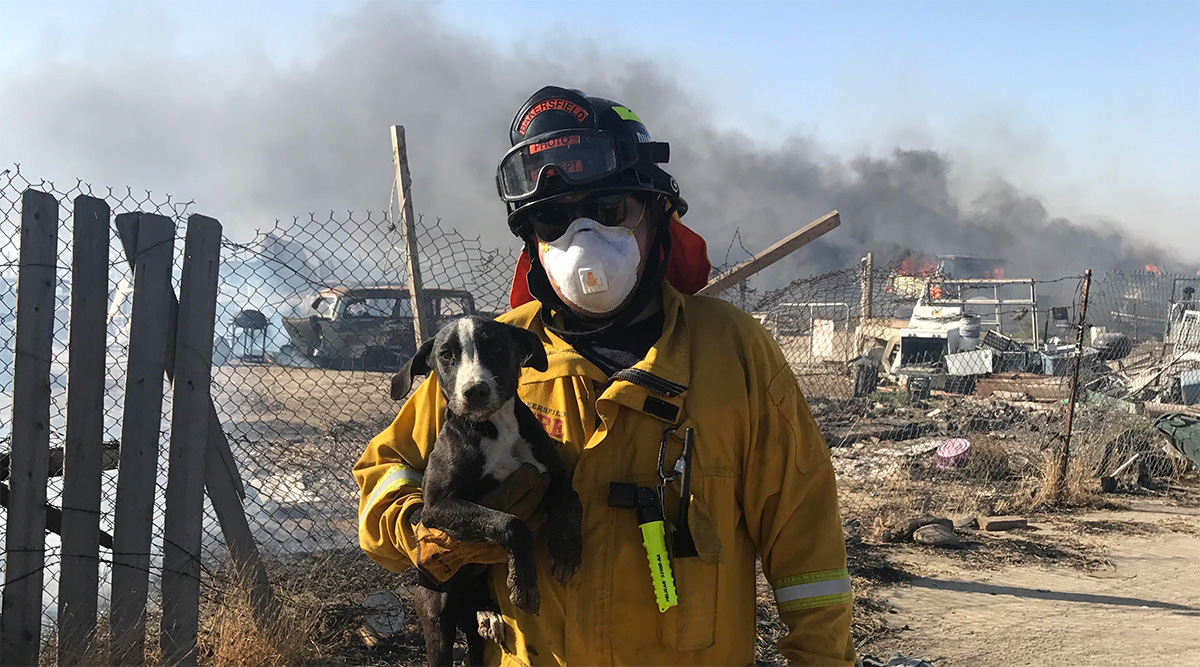 pelican professional blog roy pena firefighter dog rescue